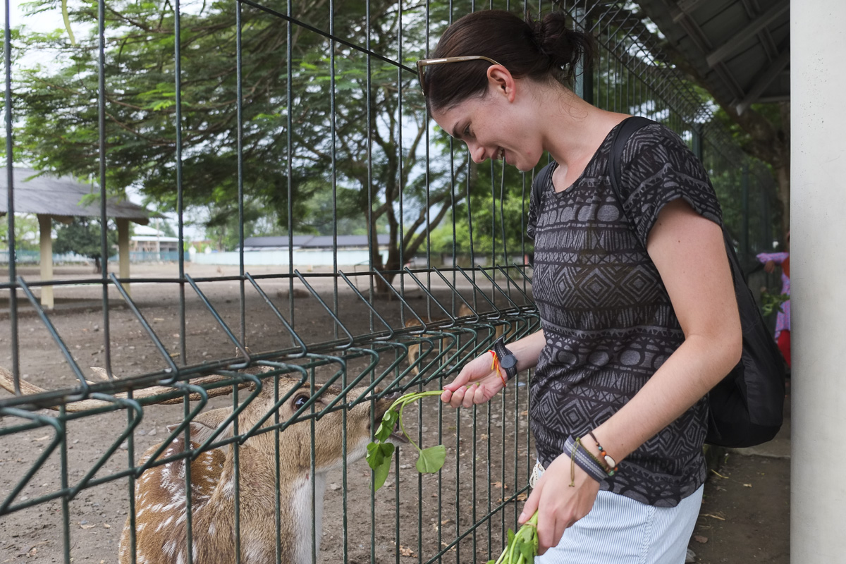 Yogyakarta Prambanan Deer Feeding