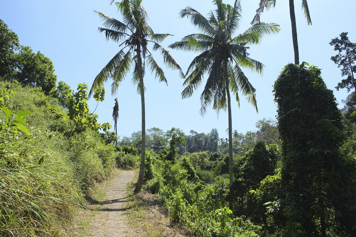 Ubud Country Walk