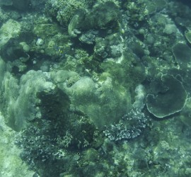 Bali Nusa Pedina Coral