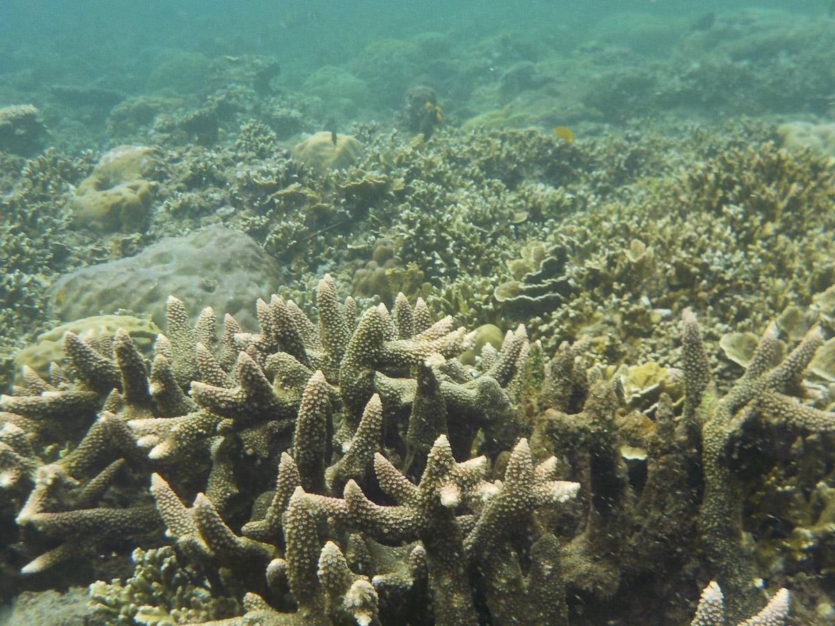 Bali Coral Reef