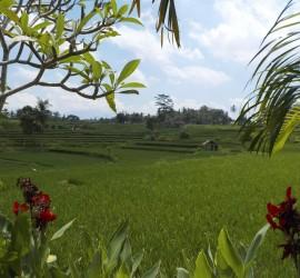 Bali Ubud Scenery