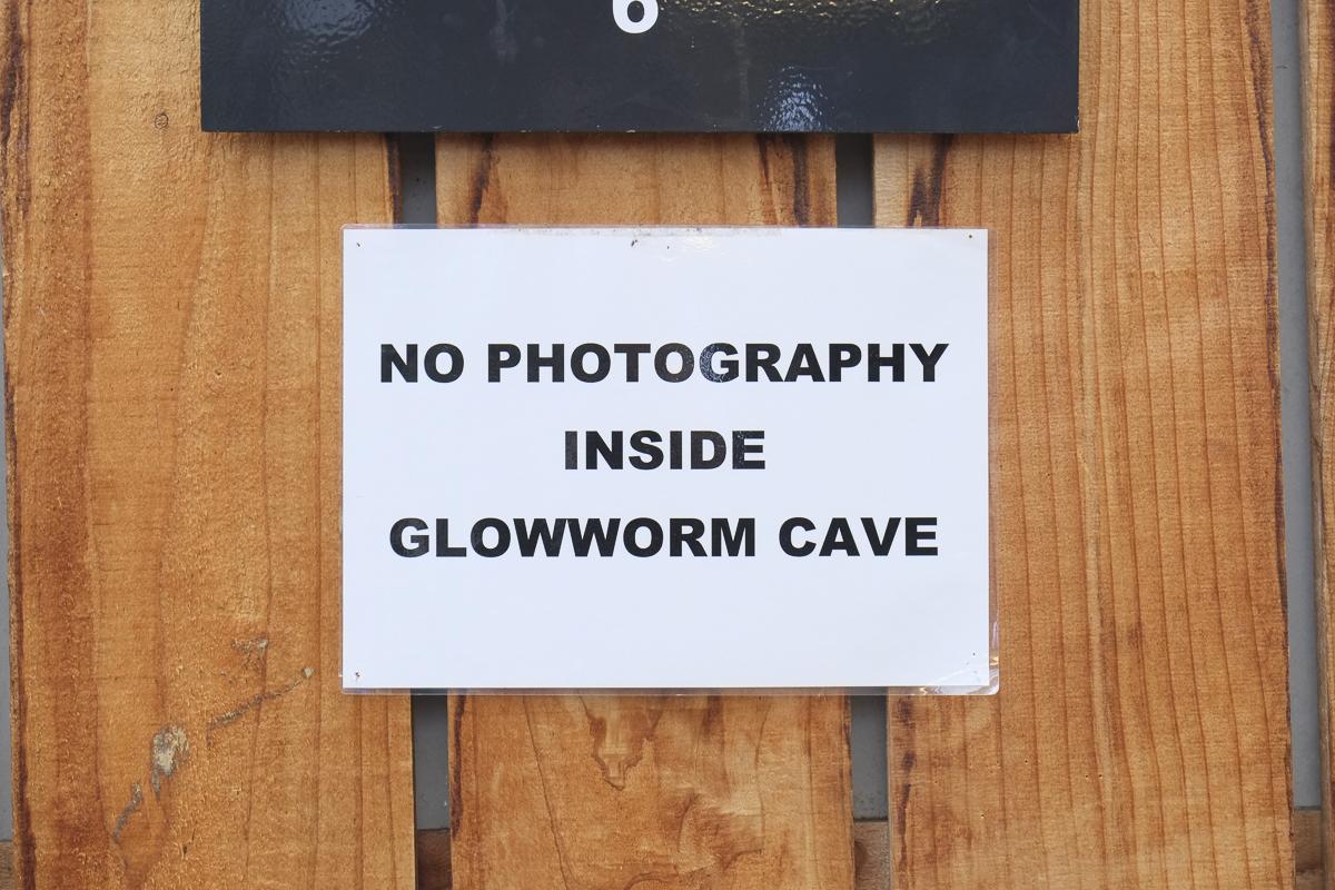 Waitomo Glow Worm