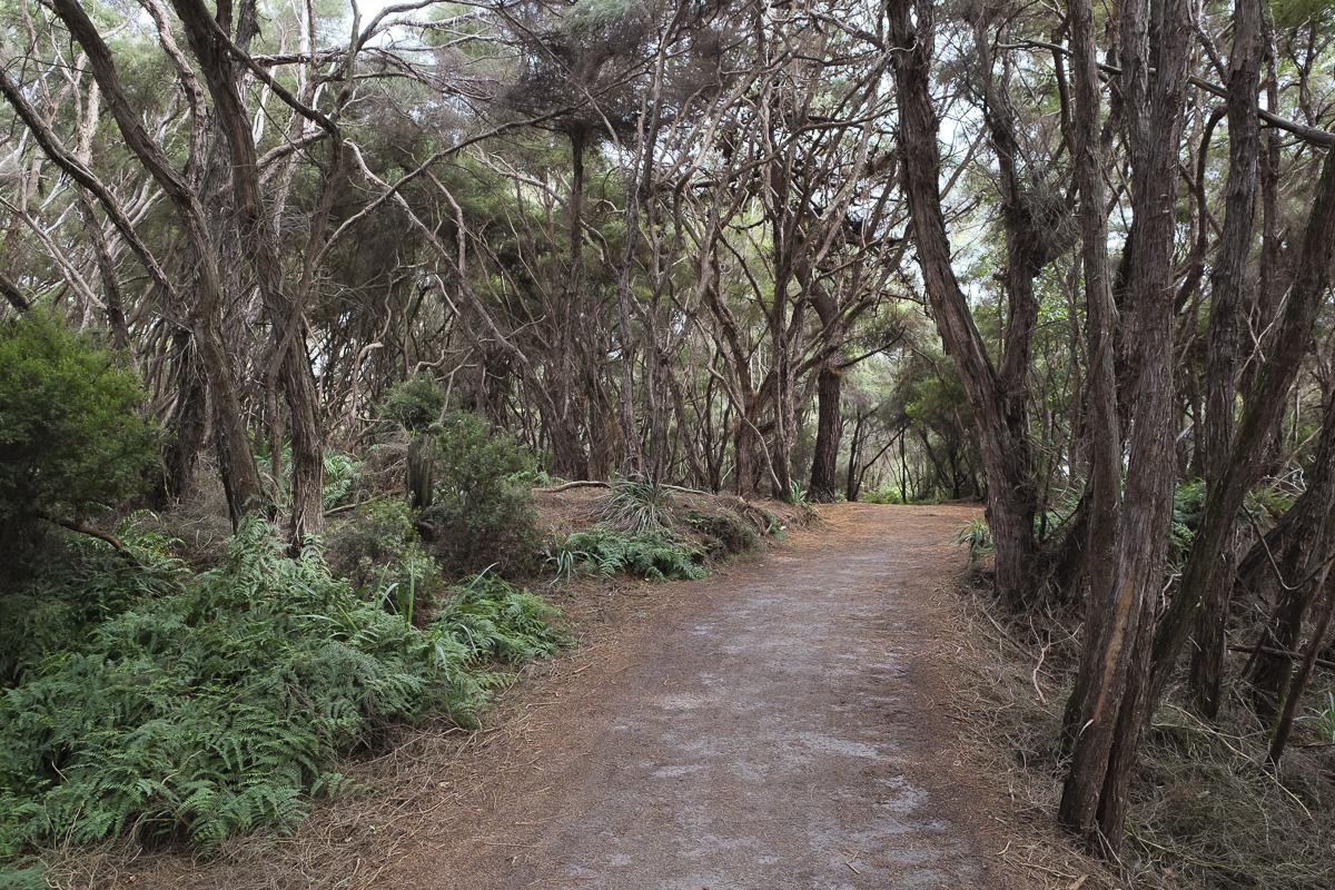 Rotorua Walk Pathway