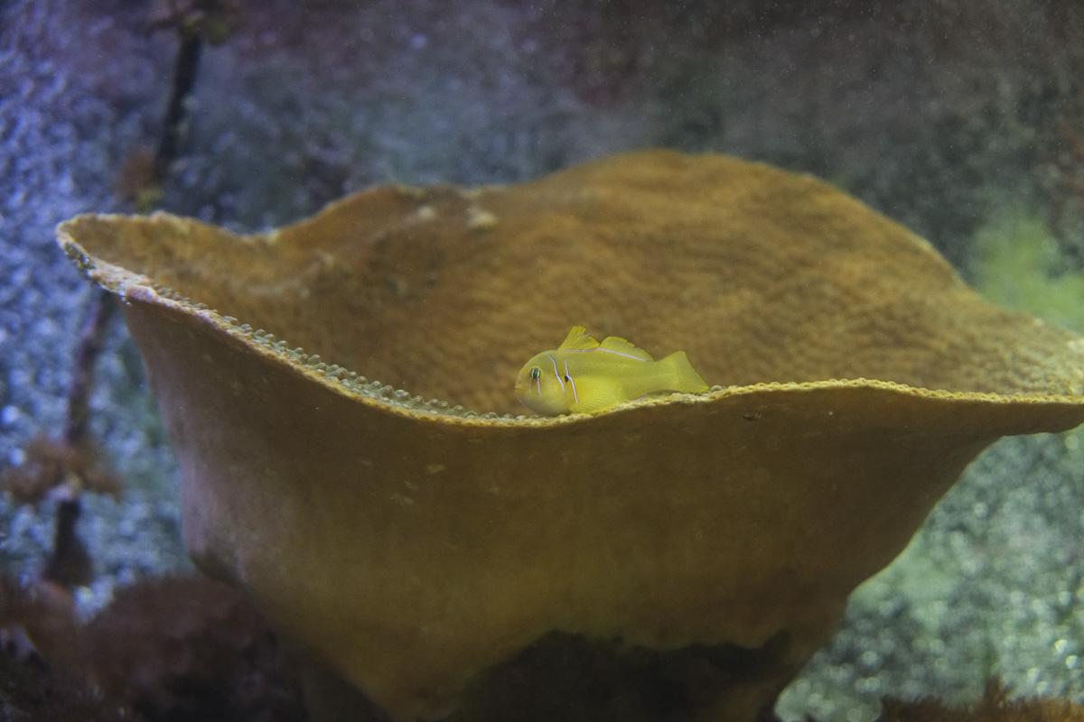 Napier Aquarium Fish New Zealand-9